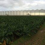 Green vent - Project Frankrijk